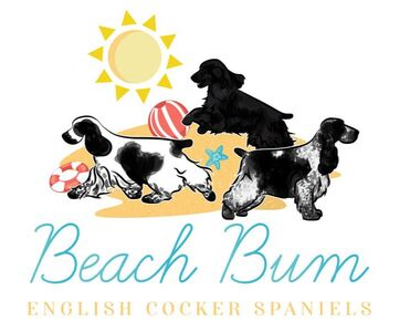 Beach Bum English Cockers